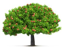 Red apple tree. 3D illustration Royalty Free Stock Images