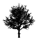 Red apple tree silhouette Stock Image