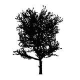 Red apple tree silhouette Royalty Free Stock Images