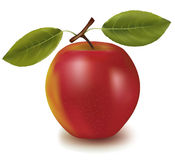 Red apple with two leaves. Stock Images