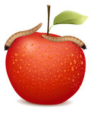 Red apple with two worms on it Stock Photography