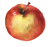 Red apple. Watercolor hand painting illustration stock photo