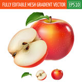 Red apple on white background. Vector illustration Stock Photos