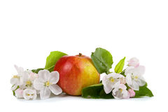 Red apple and white flowers Royalty Free Stock Photo