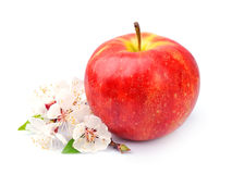 Red apple with white flowers Stock Photo