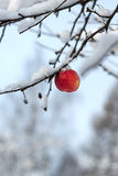 Red apple on the white snow Royalty Free Stock Photography