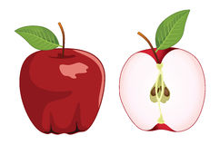 Red apple whole and half apple , vector set. Vector illustration Stock Image