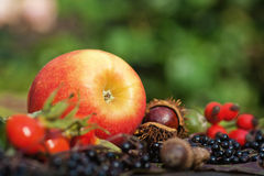 Red apple with wild fruits Royalty Free Stock Images
