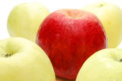 Red Apple between Yellow. Red Leader Apple between Yellow Apples Isolated on White Stock Photo