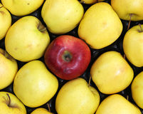 Red apple with yellow apples Stock Images
