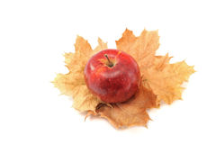 Red apple on yellow autumn leaves on a white background Stock Photo