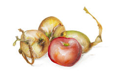 Red apple and yellow onion isolated. Red apple and yellow onion still life composition iasolated- handmade acrylic painting illustration on a white paper art vector illustration