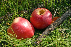 Red apples. Two red apples on the green grass nature background royalty free stock image