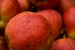 Red Apples. Closeup of a red ripe apple. Shallow depth of field. Blurred apples in the background Stock Images