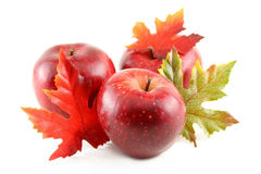 Red Apples. Three red apples with autumn colored leaves on a white background stock images