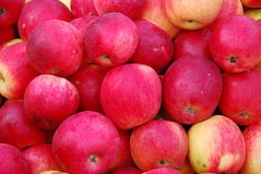 Red apples. Fresh red apples just taken off the tree Stock Photo