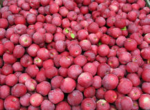 Red Apples. Stack of freshly picked red apples Royalty Free Stock Image