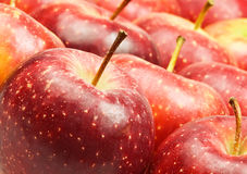 Red apples. Close up on red apples Stock Photography