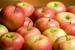 Red apples. Many red apples in the kitchen Royalty Free Stock Photos