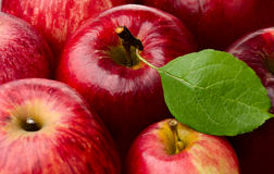 Red Apples. Fresh Red Apples and Green Leaf Royalty Free Stock Photo