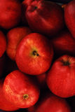 Red apples. Group of delicious red apples Stock Images