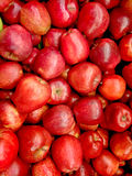 Red apples. See my other works in portfolio Royalty Free Stock Images