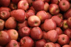 Red apples. Lots of red apples stock images