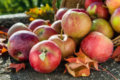 Red apples in a basket with autumn leaves. Side view stock images