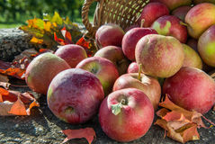 Red apples in a basket with autumn leaves. Side view Royalty Free Stock Photo