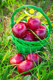 Red apples in the basket Stock Images