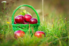 Red apples in the basket Royalty Free Stock Image