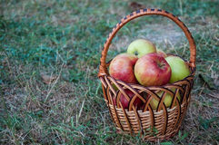 Red apples in a basket on a dry grass Stock Photo