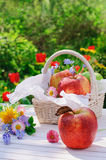Red apples in basket and flowers in the garden Stock Photo