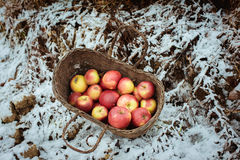 Red apples in a basket Stock Photos