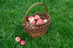 Red apples in a basket Royalty Free Stock Image