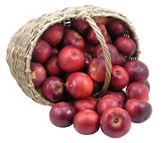 Red apples in basket -isolated Stock Photography