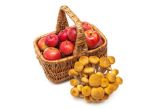 Red apples in a basket and mushrooms isolated on white backgroun Stock Images