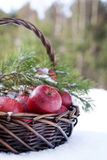 Red apples in basket in snow, outside Royalty Free Stock Photos