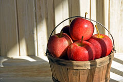 Red apples and basket in striped sunlight Royalty Free Stock Photo
