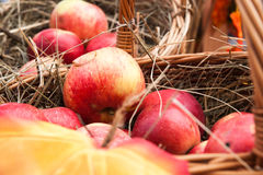 Red apples in baskets Stock Photos