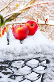 Red apples on a bench in the winter garden royalty free stock images