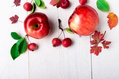 Red apples big and small on white wooden background. Frame. Autumn concept. Top view. Copy space. Red apples big and small on white wooden background. Frame royalty free stock images