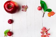 Red apples big and small on white wooden background. Frame. Autumn concept. Top view. Copy space. Red apples big and small on white wooden background. Frame stock photography