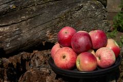 Red apples on a black plate tree stump background stock photos
