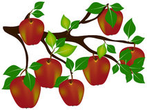 Red apples on a branch. Royalty Free Stock Photography