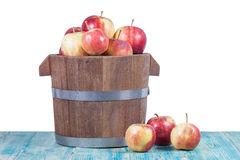 Red apples in  bucket Stock Images