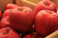 Red apples. In carton box sold in a market Stock Photos