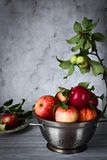 Red apples in a colander on a gray background Royalty Free Stock Photos