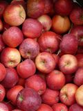 Red apples in a crate. Red apples in a wood crate for sale at the Farmer's Market Royalty Free Stock Photography