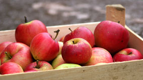 Red apples in the crate Royalty Free Stock Photo